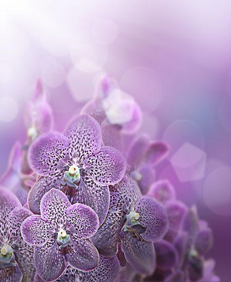 Visuaalisuus violetti